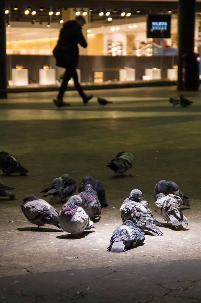 Pigeons at Sergels torg