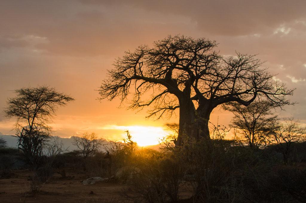 National Park Ruaha, Tanzania