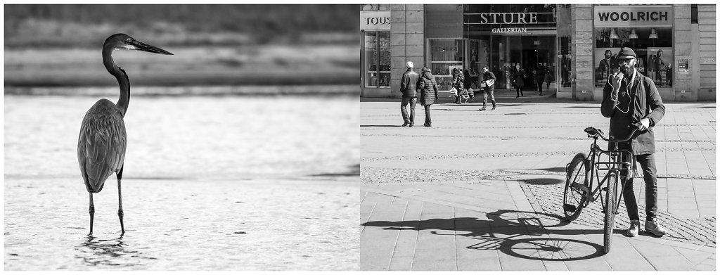 Urban Djungle II, Stockholm
