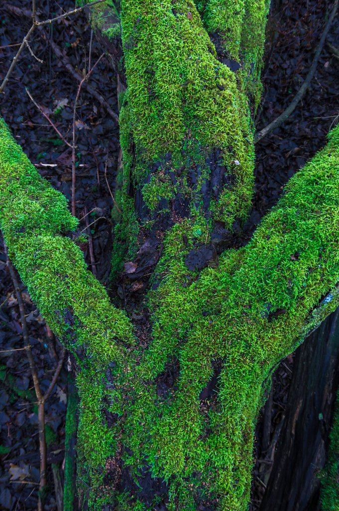 Green moss 4