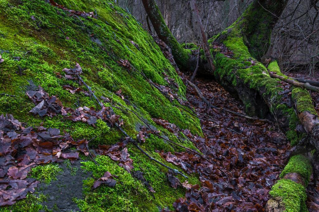 Green moss 3