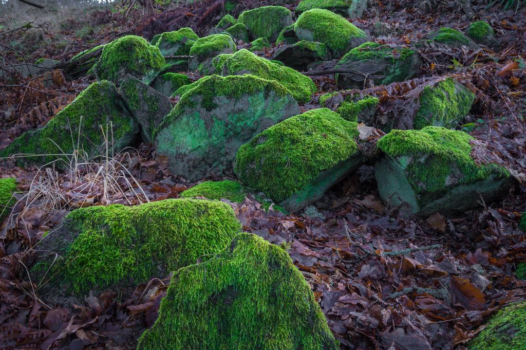 Green moss 7