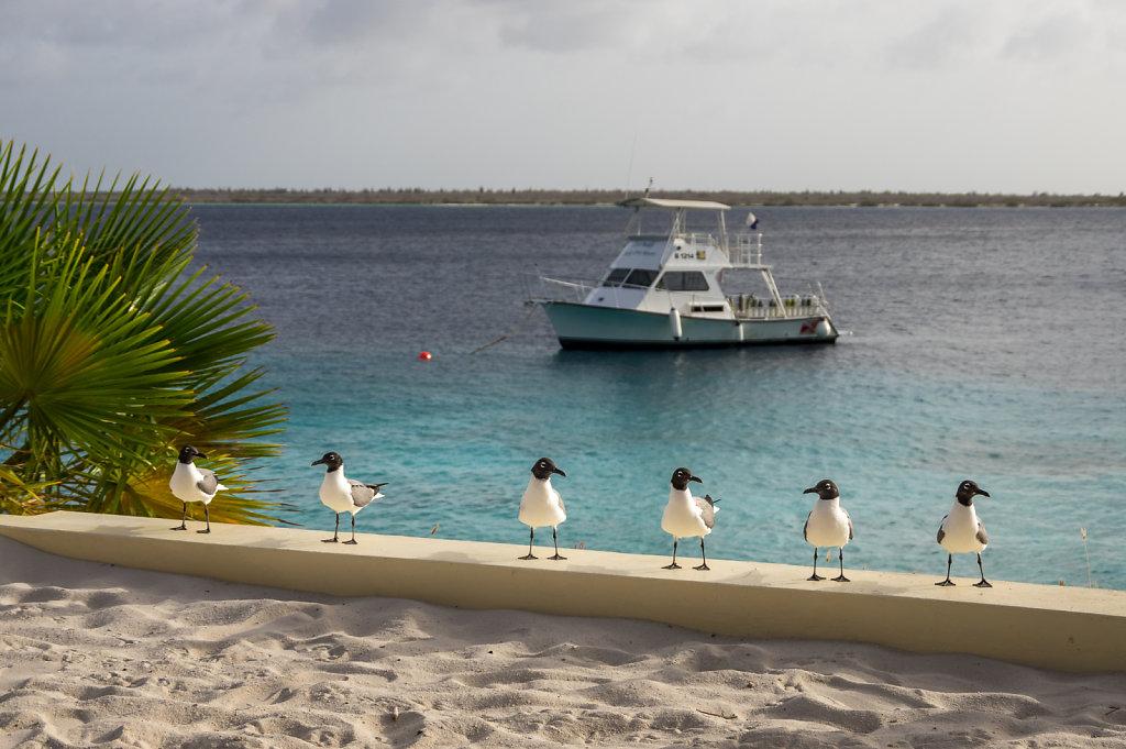 2016-Bonaire-4.jpg